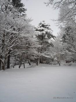 雪の中の木通庵
